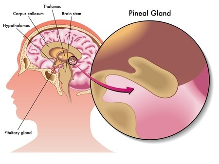 pineal gland, third eye, meditation, psychic, mind, indian hypnosis academy, dr jp malik